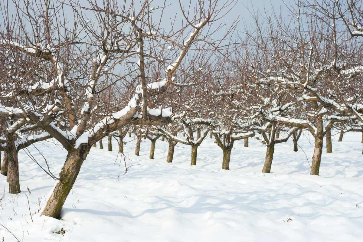 Activitati in livada inainte de iarna