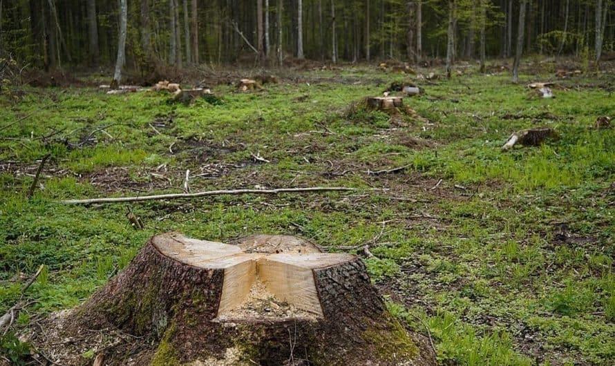 Furtul de arbori, fapta penala indiferent de cantitate